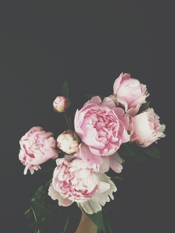 The Pink Peonies 138 best peonies images on pinterest | fresh flowers, pink peonies