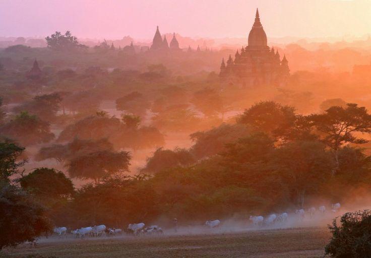 Un berger conduit son troupeau devant les anciennes pagodes de Bagan enveloppées de brouillard orangé en Birmanie  © Ye Aung Thu/AFP