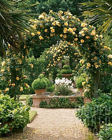 Arches of rosa 'Marigold'