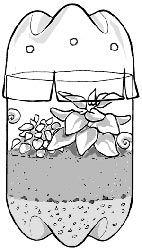Directions to build a terrarium