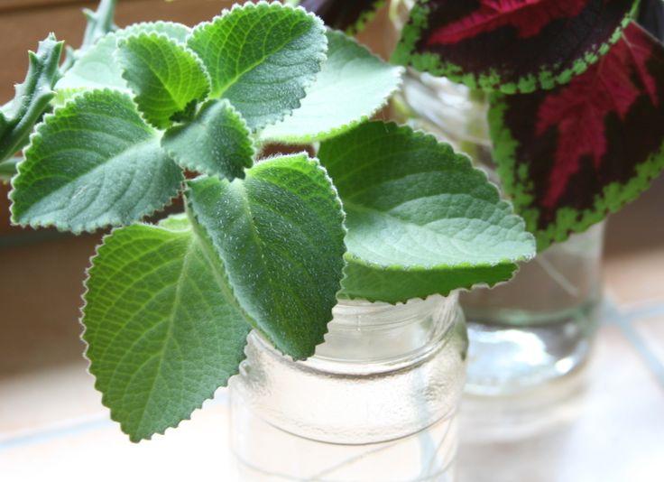 11 besten zimmerpflanzen bilder auf pinterest zimmerpflanzen balkon deko und blumengarten. Black Bedroom Furniture Sets. Home Design Ideas