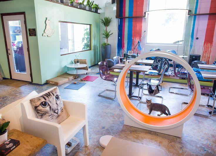 Blue Cat Cafe, Austin
