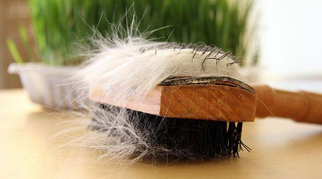 Katzenhaare entfernen leicht gemacht » Tipps