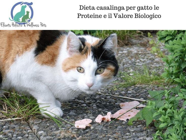 Dieta casalinga per gatto le Proteine e il Valore Biologico via @elicats