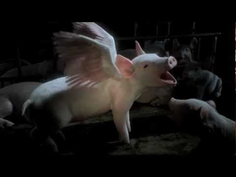 Imagine a world without factory farming - SAFE's new ad