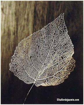 cómo esqueletizar hojas de plantas-eltallerdejazmin