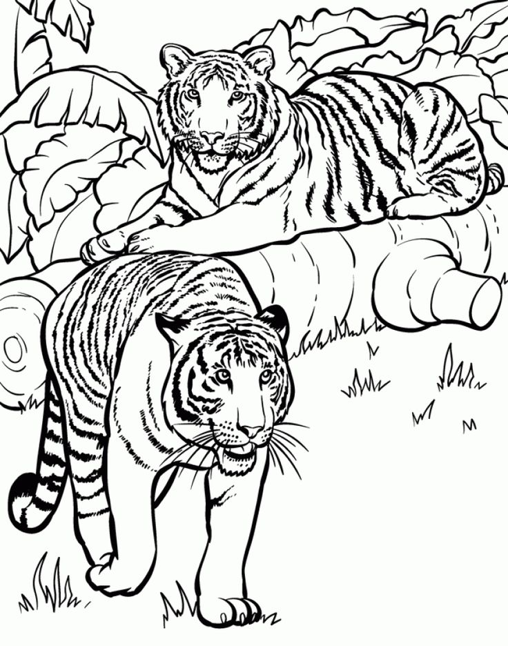 98 best Wild Animals Coloring Pages images on Pinterest | Drawings ...