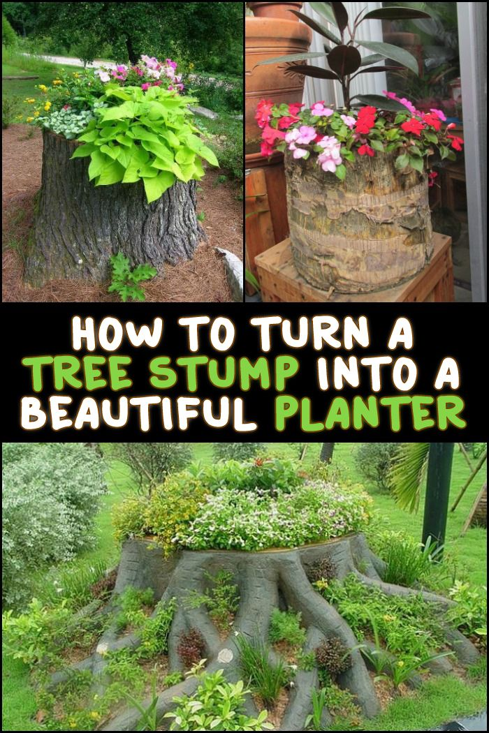 Removing tree stumps can be very difficult. If it's not necessary to get rid of them, why not turn them into planters instead? Be inspired by these examples we have for you...