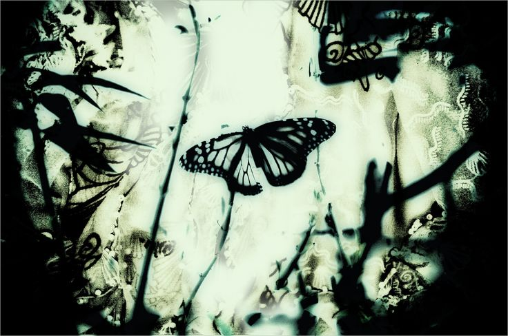 The Dream Of The Butterfly