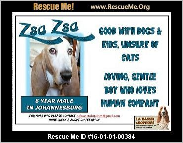 ― South Africa Dog Rescue ― ADOPTIONS ―RescueMe.Org