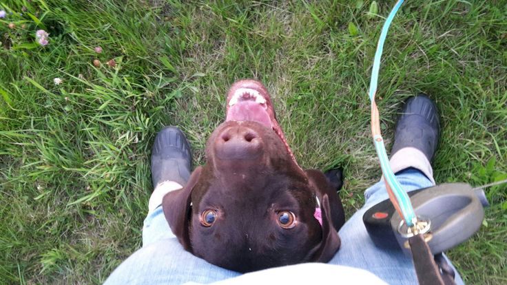 Wie bei Facebook versprochen, hier nun die Links zu den Ebooks von AbsoluteDogs, Hierbei handelt es sich überwiegend um kleine 3-Minuten Spiele, die nicht nur die Beziehung zwischen Hund und Mensch stärken, sondern auch bei vielen Alltagsproblemen helfen können.