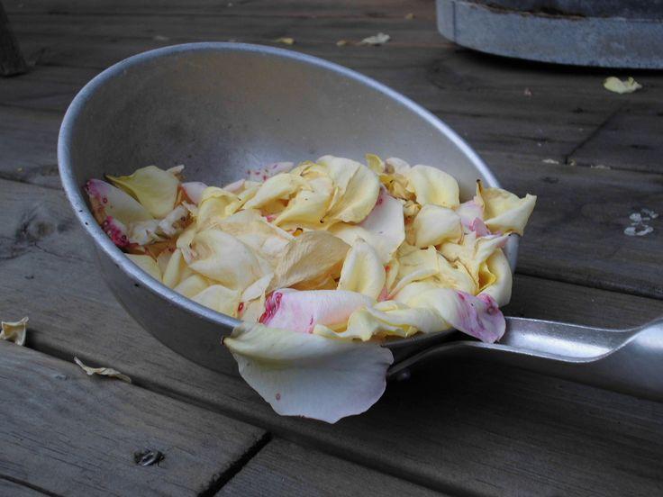 Roseblader om høsten
