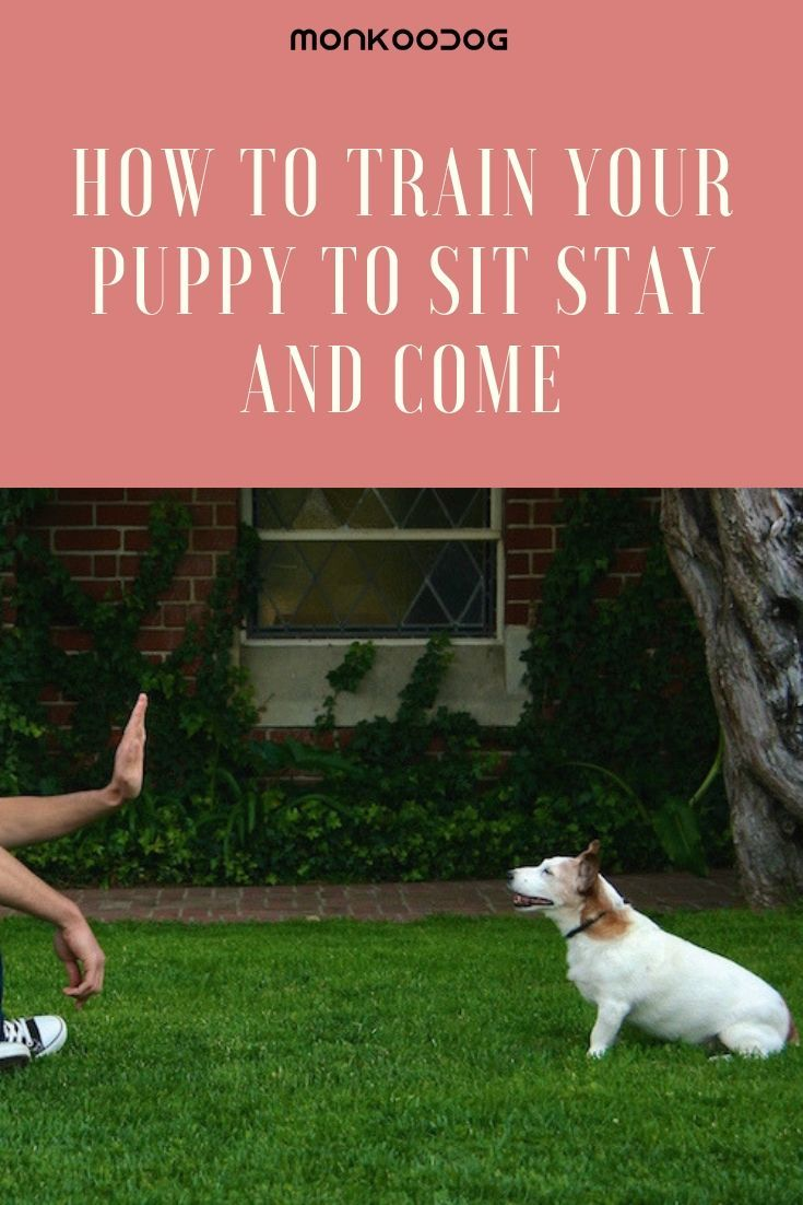 It Is Not Difficult To Train The Dog Tricks In Just A Few Days As