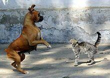 vechten of vluchten.