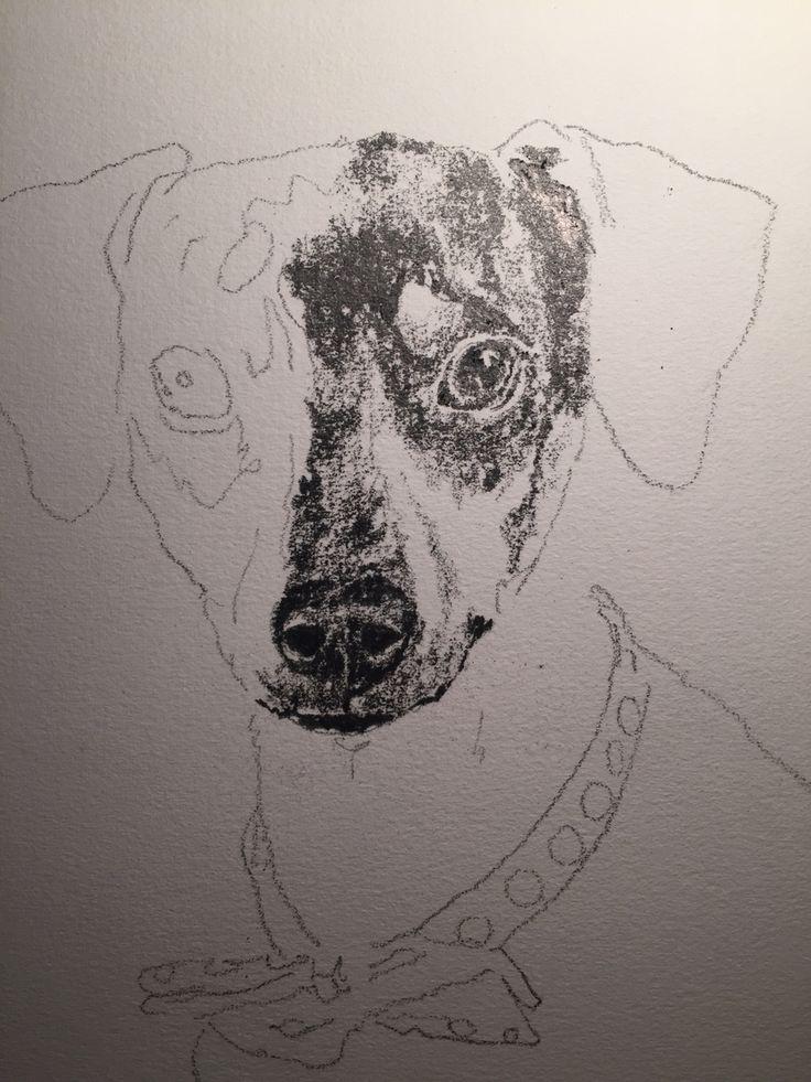 Perro Quiltro dibujo ilustracion grafito proceso