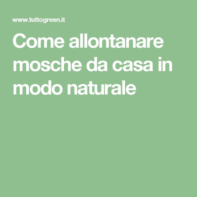 Come allontanare mosche da casa in modo naturale