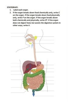 38 best Digestive system images on Pinterest   Life science ...