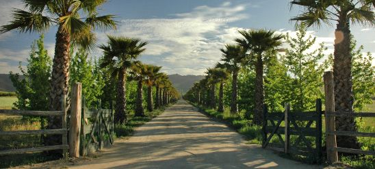The palm lined entrance to the winery guides you up to the Kingston bodega.