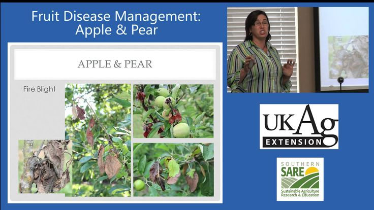 Nicole Ward Gauthier, Extension Plant Pathologist at the University of Kentucky explains apple and pear disease management options for home gardening, including sustainable and organic management techniques.