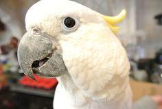Think Your Pet Bird Hates You? | Petcha