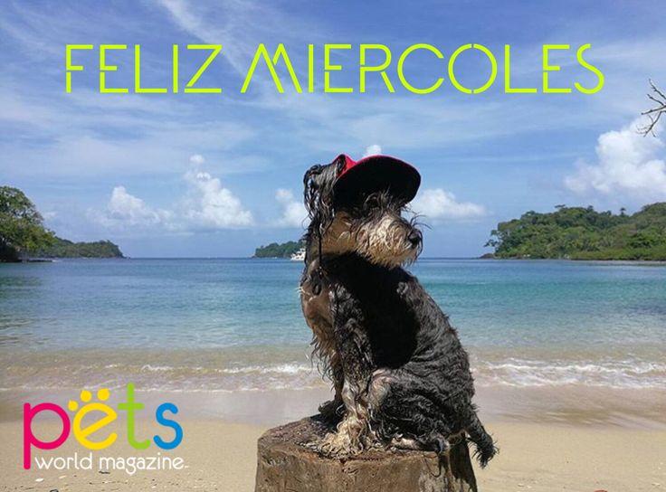 Feliz miércoles  ombligo de semana   #PetsWorldMagazine #RevistaDeMascotas #Panama #Mascotas #MascotasPanama #MascotasPty #PetsMagazine #MascotasAdorables #Perros #PerrosPty #PerrosPanama #Pets #PetsLovers #Dogs #DogLovers #DogOfTheDay #PicOfTheDay #Cute #SuperTiernos