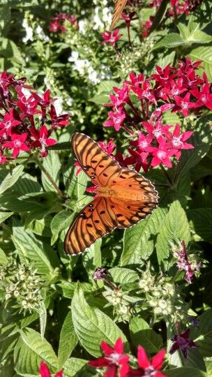 Beatiful butterfly at Litchfield Resort in Pawleys Island, SC