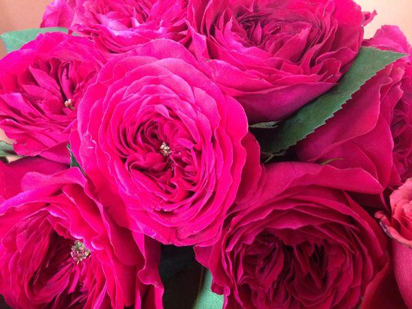 Roses In Garden: 192 Best Roses Images On Pinterest
