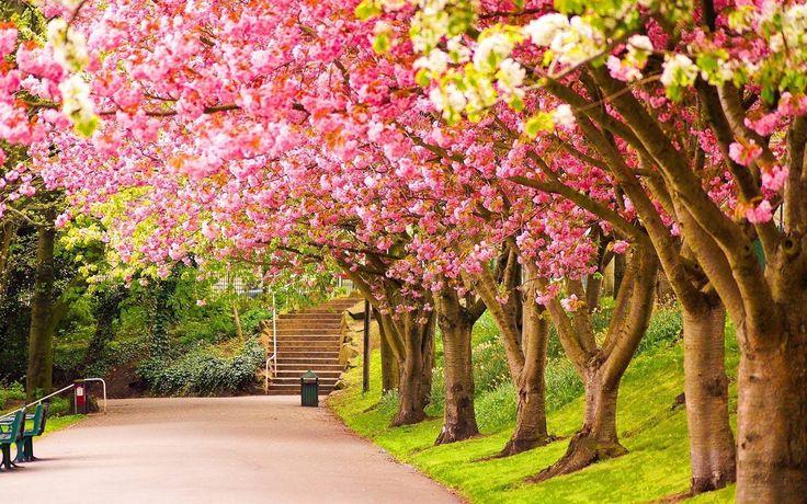 Elegant Pretty Spring Pictures for Desktop (Dengan gambar