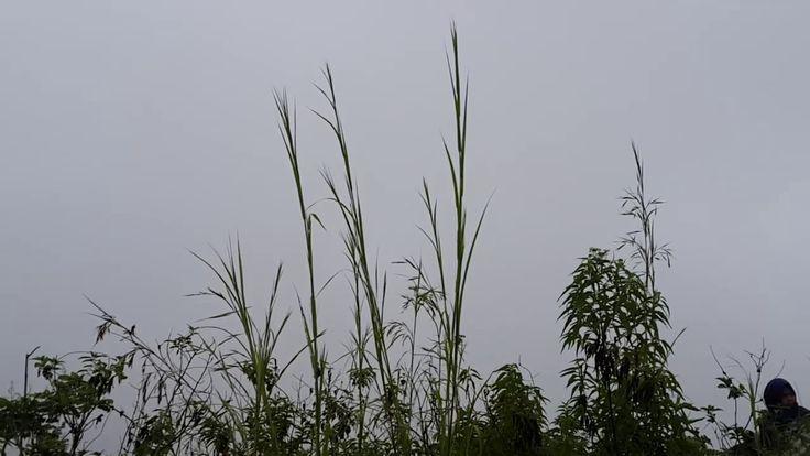 View from The Top of Ngalau Indah Payakumbuh_1 https://youtu.be/wzhNRswLoUg