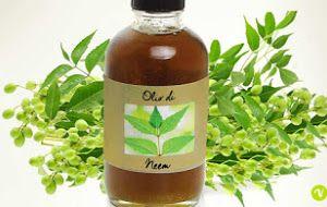 Olio di Neem, proprietà, benefici ed i suoi numerosi utilizzi
