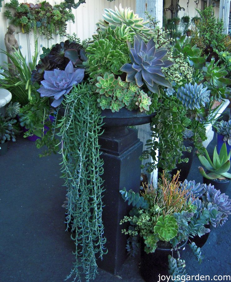 Love the Succulent containers at Dana Point Nursery.