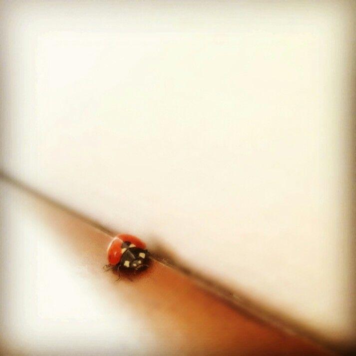 #ladybird #fotografie