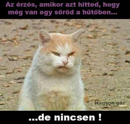 Sör / humor / macska