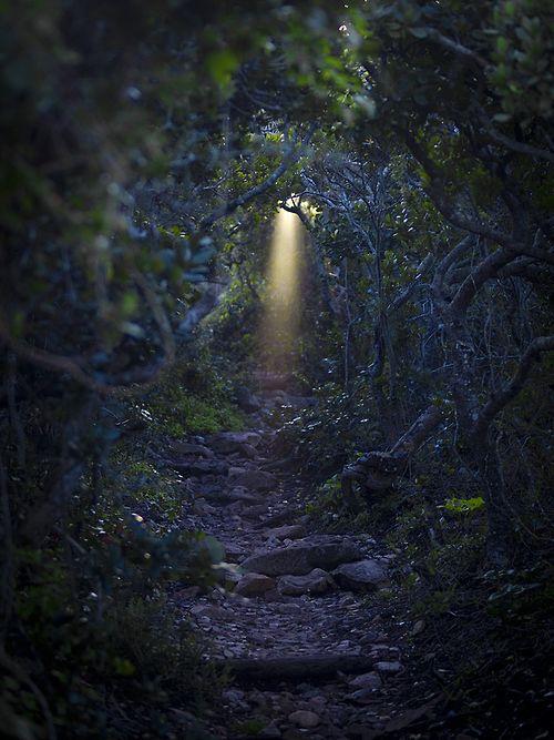 Steps to  Serendipity by Warren Fleming