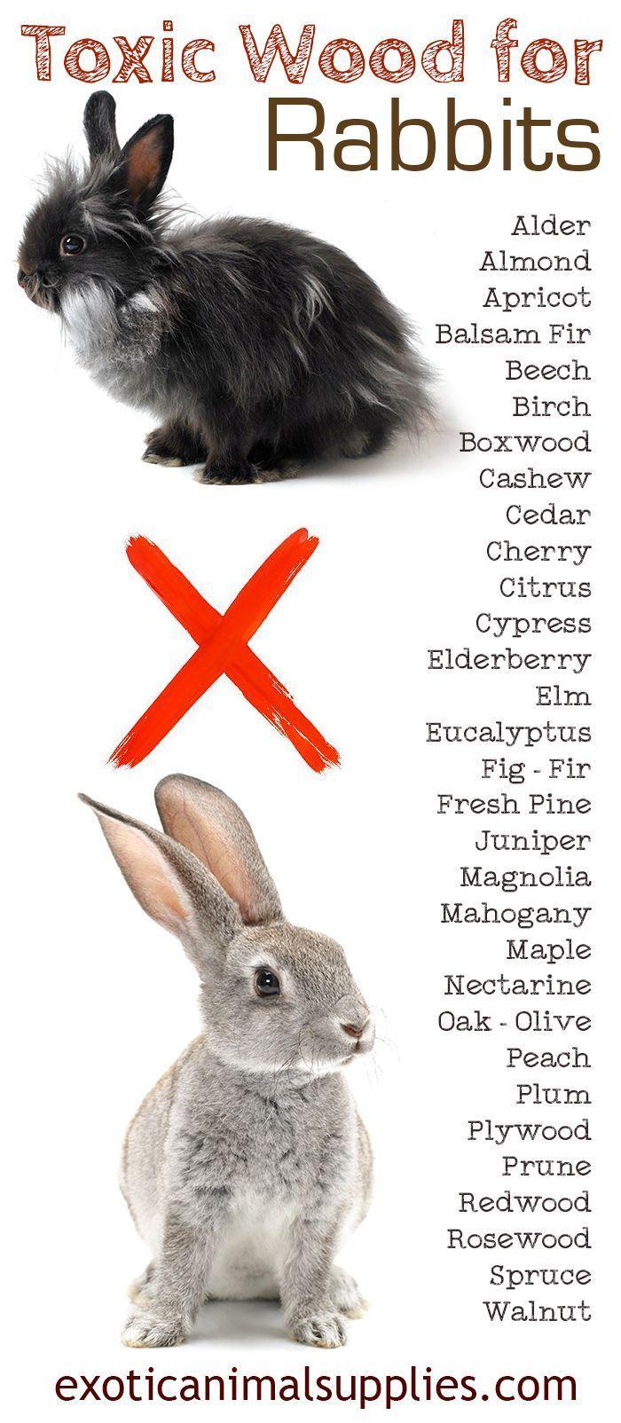 54 Best Rabbit Care Images On Pinterest Bunny Bunny Pet