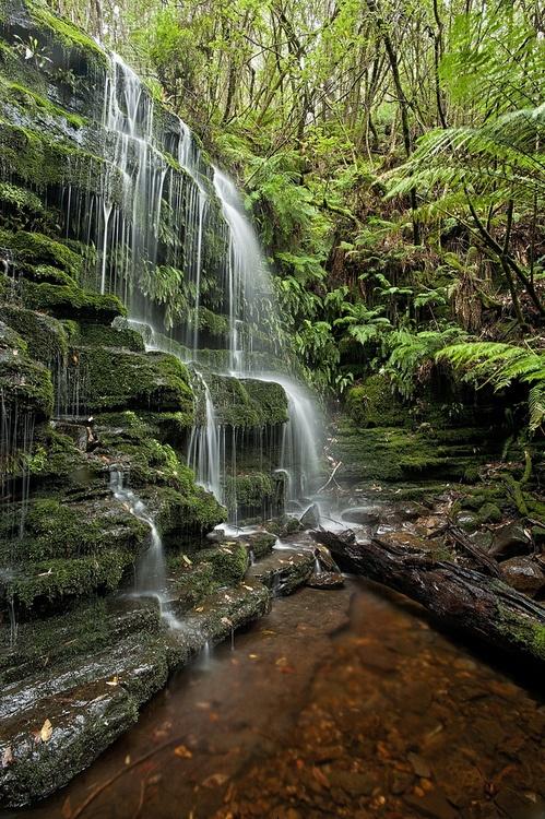 Myrtle Gully Falls, Hobart, Tasmania