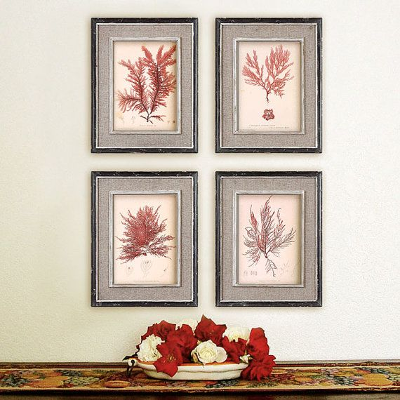 Set of 4 fascinating prints of Red Algae for by RoyalArtPrints