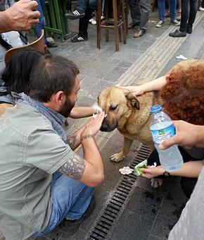 Συγκλονιστικές εικόνες από τα επεισόδια στην Τουρκία: Τούρκοι διαδηλωτές βοηθούν έναν αδέσποτο σκύλο που υποφέρει από τα δακρυγόνα