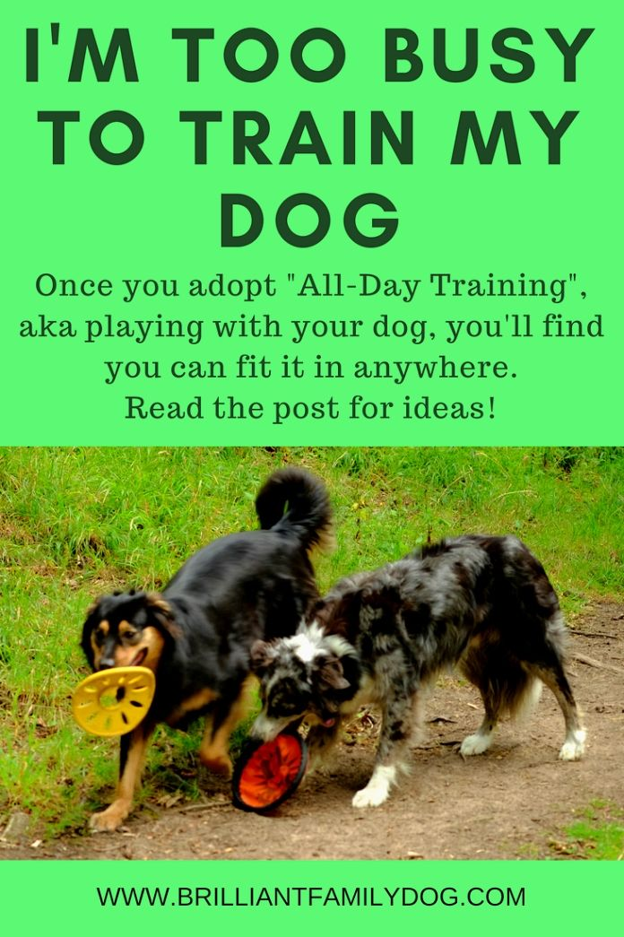 Dog Training Ideas When You Know Your Dog Will Have To Potty