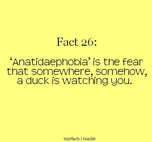 'Anatidaephobia' is the fear that somewhere, somehow, a duck is watching you.