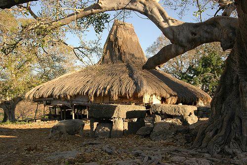 Sumba Traditional House - Komodo, Indonesia.A Sumba House in Prailiang, East Sumba.