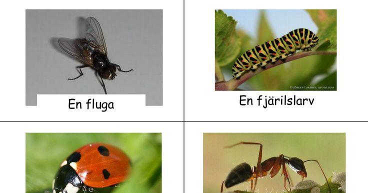 Insekter.pdf