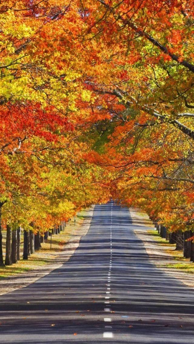 Mount Macedon, Small Town, Melbourne, State Of Victoria, Australia, Europe, Geography, http://www.travelmagma.com/australia/things-to-do-in-melbourne#.VSUOv2PI-1E