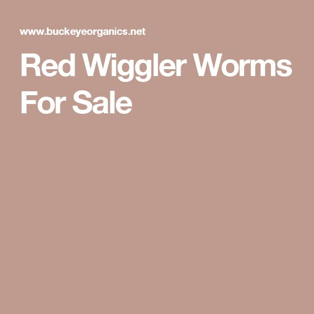 Red Wiggler Worms For Sale