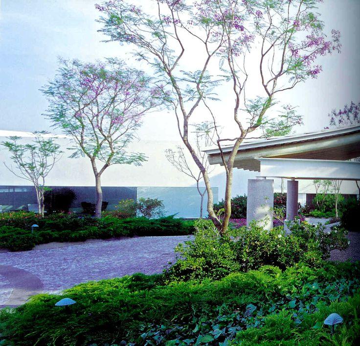 Jacaranda mimosifolia mejoresplantas plantas de for Planta ornamental jacaranda
