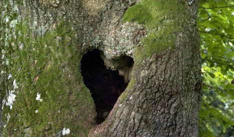 Tree trunk heart