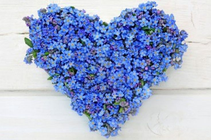 Heart made of forget me not flowers on white wooden background
