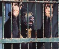 Best Important Petitions Images On   Animal Rights