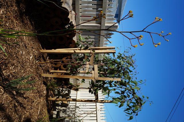 www.gardenconsultants.com.au  Native Australian Garden. Garden Sculpture. Native planting. Kangaroo Paw