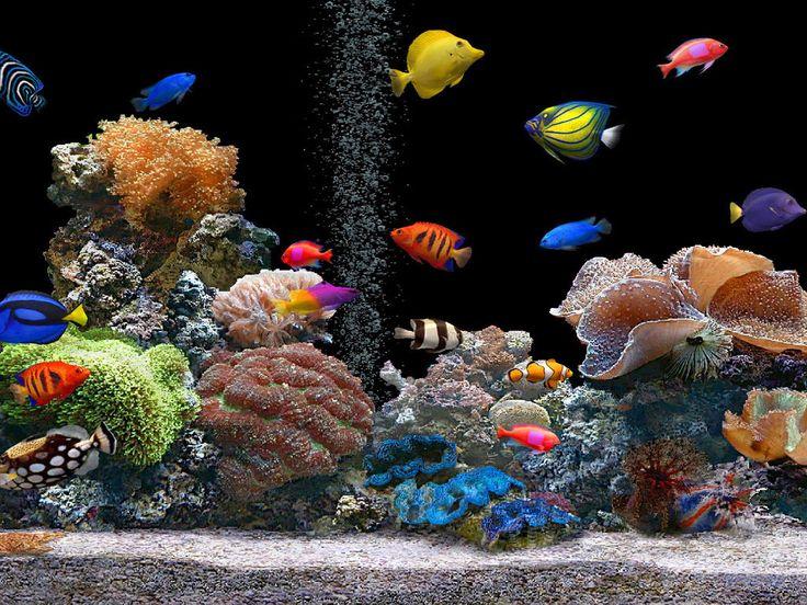 build a Reef Tank